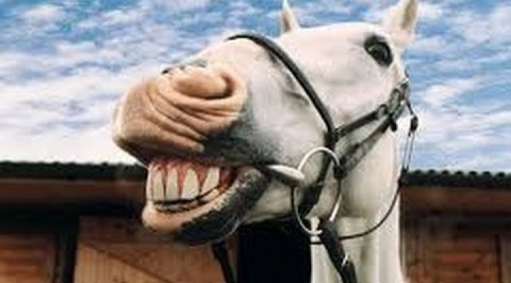 Moj konj