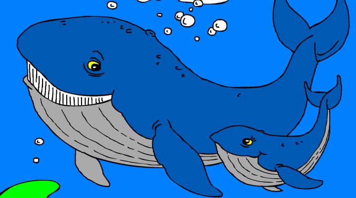 Veliki in mali kit